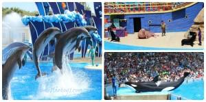 Sea World Orlando ~ the voyage begins