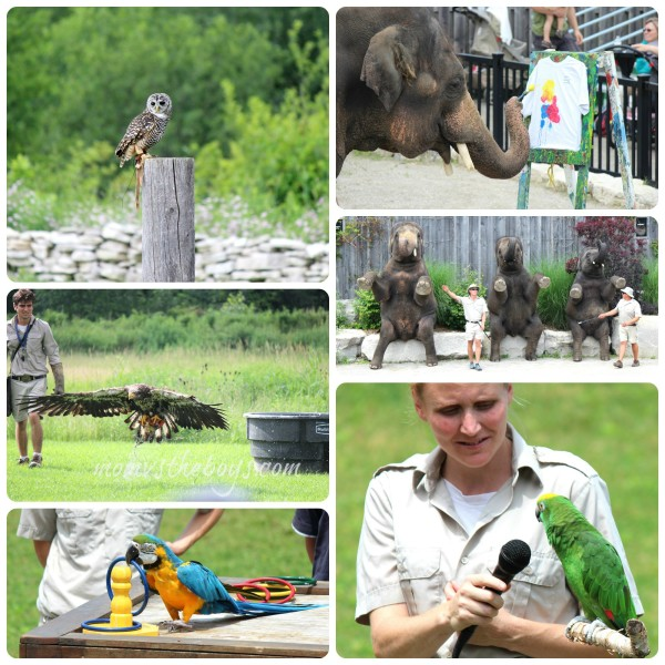 african lion safari shows