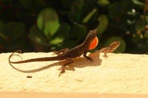 Wordless Wednesday ~ Lizard