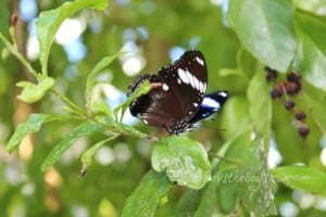 Wordless Wednesday ~ Butterflies –  @Conservatory_