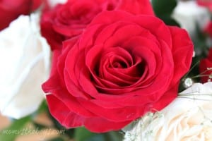 Wordless Wednesday~ Roses are Red #WW