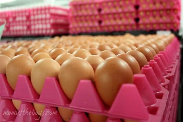Burnbrae eggs