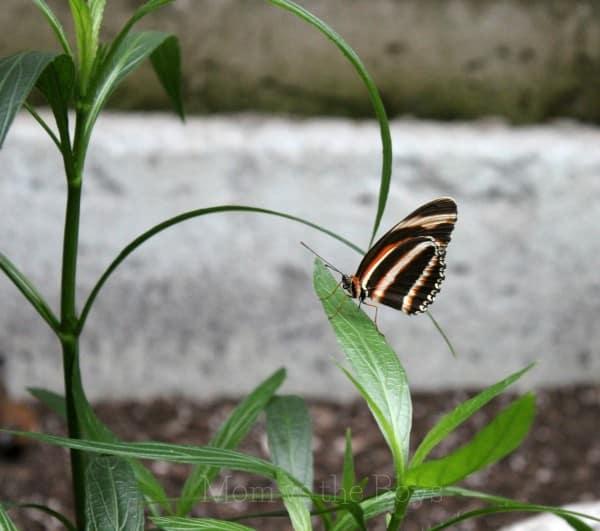 stripe pm