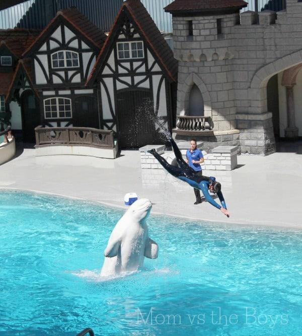 beluga in show