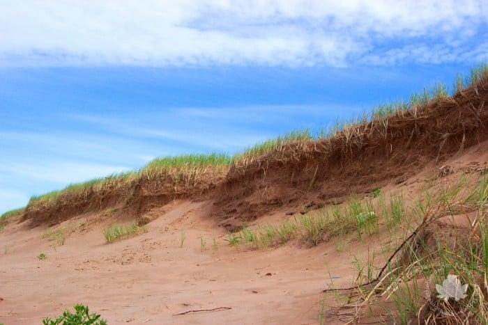 dunes of PEI