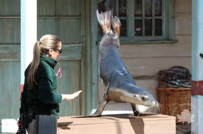 Visit Sydney with Kids - Taronga Zoo
