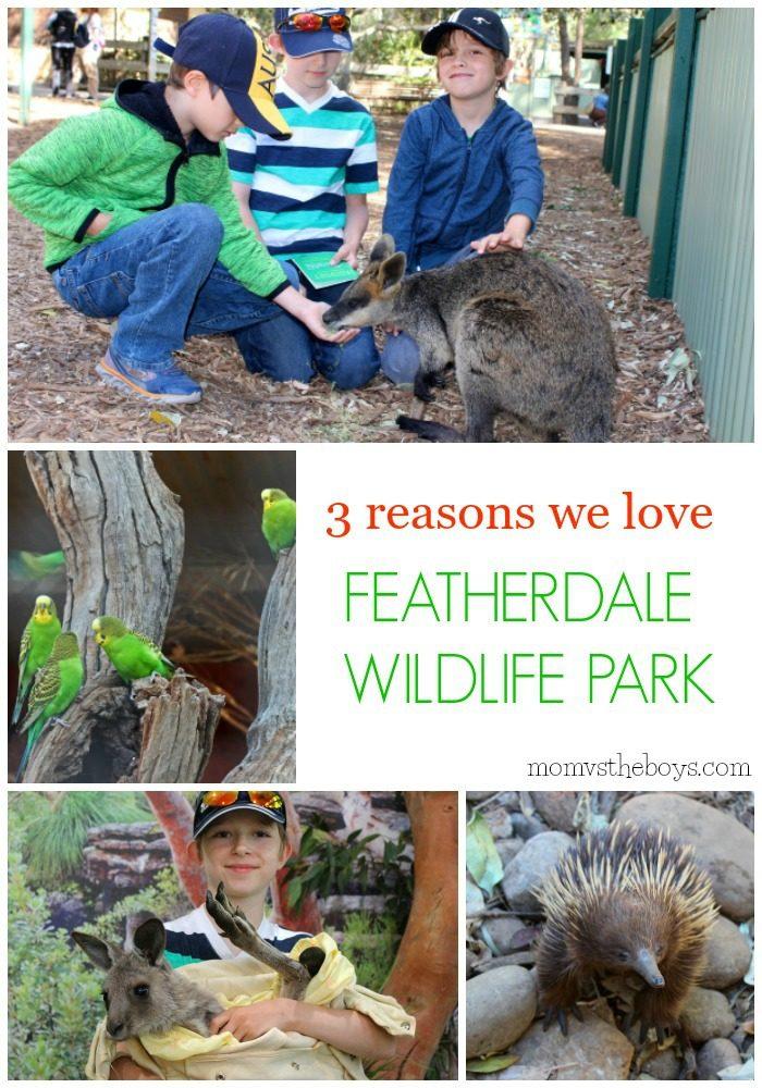 3 Reasons we Love Featherdale Wildlife Park - Mom vs the Boys