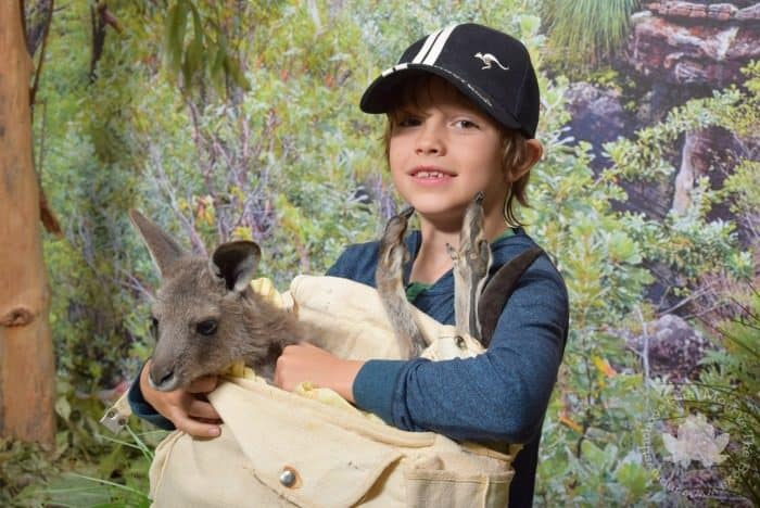 Featherdale Mammal Encounter