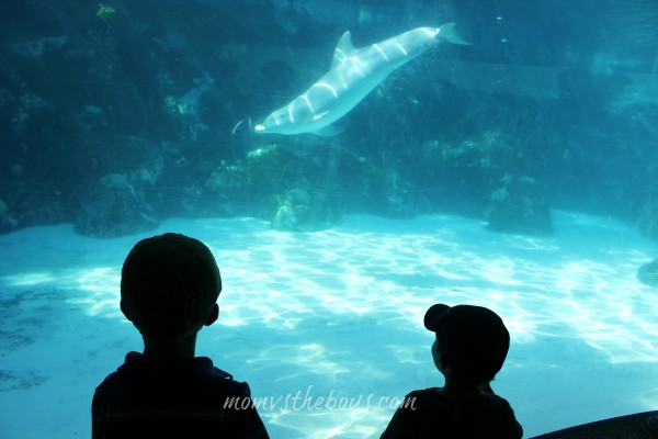 dolphin playing at  Sea World