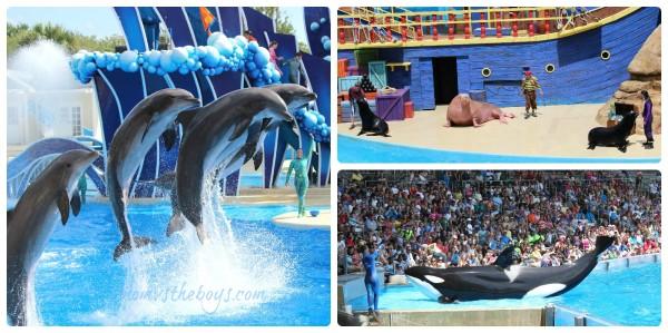 Sea World Shows