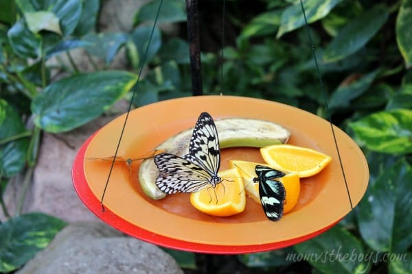 butterfly on dish