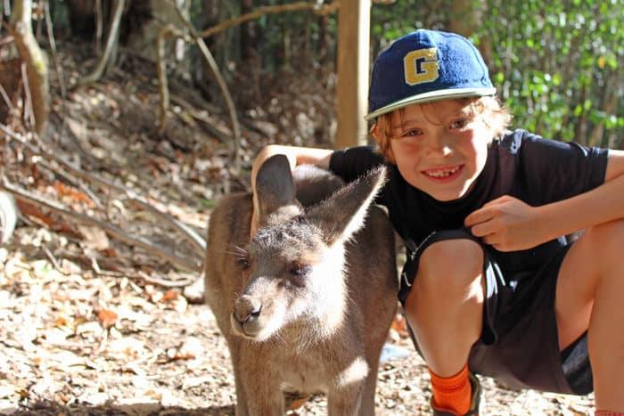 petting kangaroo at Hartley's Crocodile Adventure