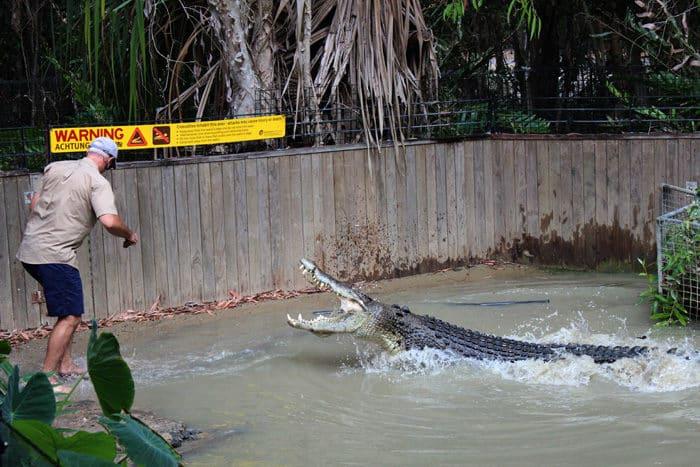 Croc Attack Show at Hartleys