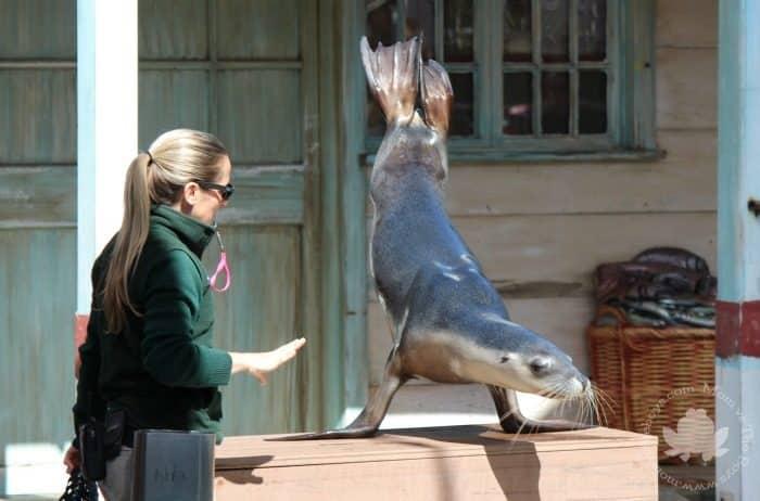 Visit Sydney with Kids - Taronga Zoo