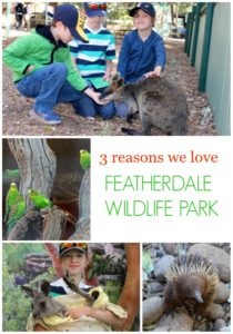 3 Reasons We Loved Featherdale Wildlife Park