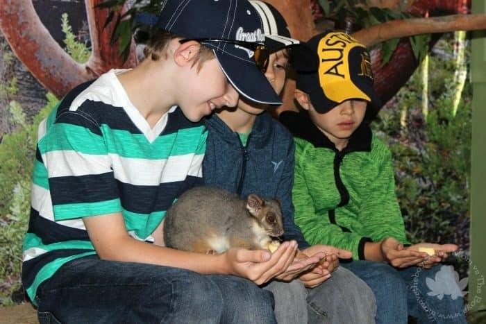 Featherdale Wildlife Park Mammal Encounter