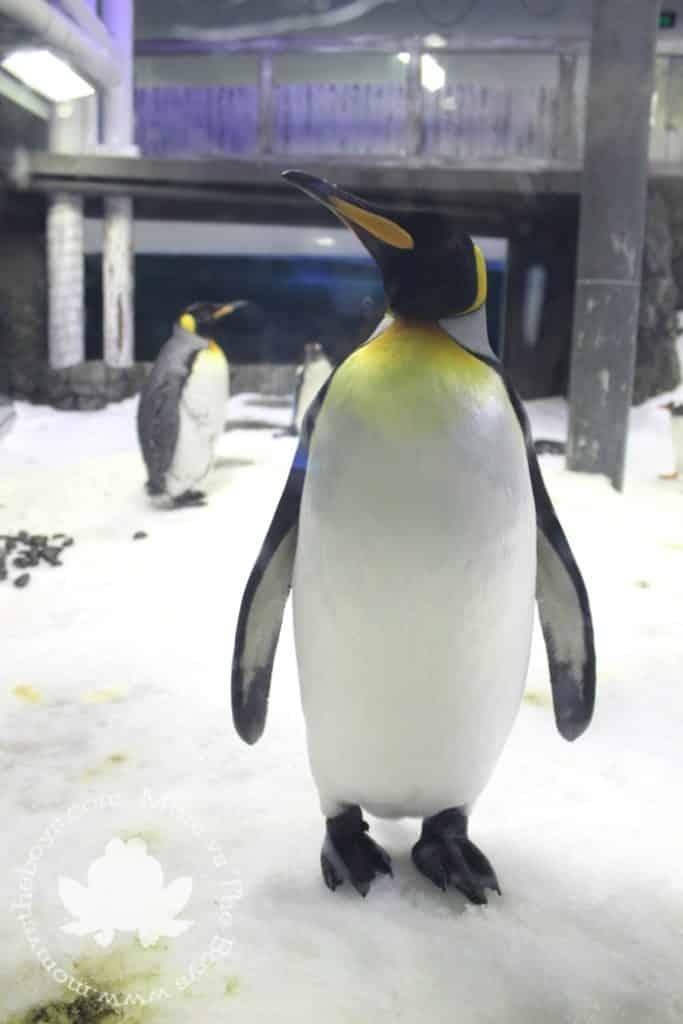 Sydney with kids - Sea Life Aquarium
