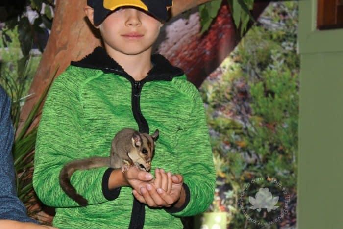 Featherdale Wildlife Park Animal Encounter